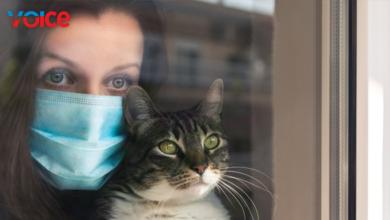 """Photo of """"Sağlığınız için kedi sevin"""""""